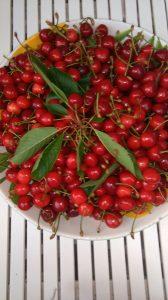 Holiday house Stara Frajla Kukljica cherries